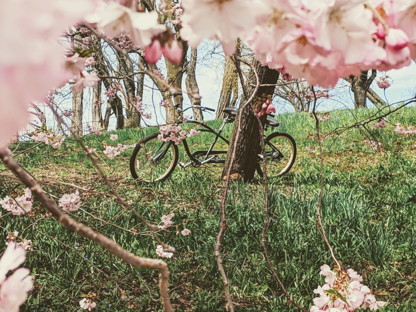 Blooming Magnificient – A Bicycle Built for Two